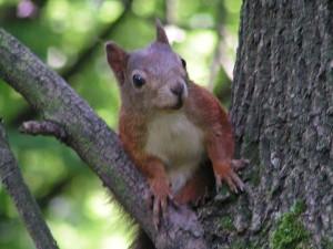 Wiewiórka w Parku Lotników w Czyżynach