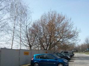 Drzewa w okolicach osiedla Dywizjonu 303 i Osiedla Avia / Orlińskiego