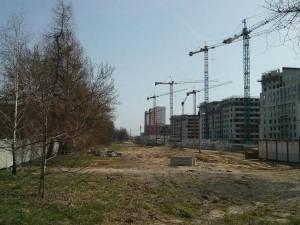 Sporne drzewa na osiedlu Avia / Dywizjonu 303 w Czyżynach