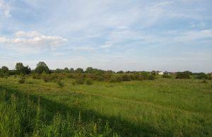 Tereny zielone nad Wisłą - Lasek Łęgowski