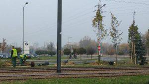 Sadzenie nowych drzew na skrzyżowaniu w Czyżynach