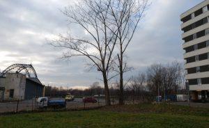 Drzewa przy hangarze Muzeum Inżynierii Miejskiej